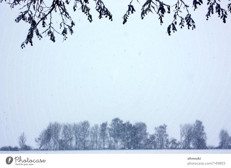 Es schneit! Winter Schnee Himmel Wolken Baum Blatt kalt Zweig Flocke Schneeflocke Ast Gedeckte Farben