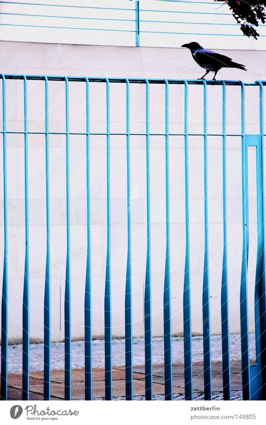 Bundesvogel Freiheit Vogel Metall sitzen Metallwaren Sicherheit Zaun Grenze Stahl anstrengen Gedanke Versicherung 8 Krähe Rabenvögel Star