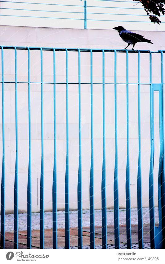 Bundesvogel Vogel Krähe Rabenvögel Zaun Metall Metallwaren Metallzaun Stahl Stahlträger Stahlkonstruktion Star sitzen Sicherheit Sicherheitsdienst Einbruch