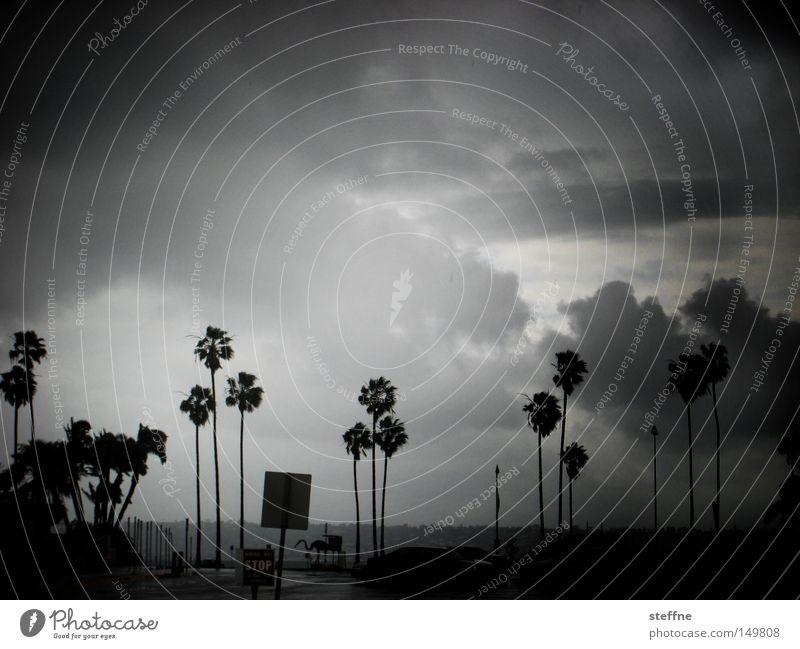 perfect storm Orkan Sturm Wind Palme Apokalypse Wolken Regen USA Wetter Hurricane-Festival