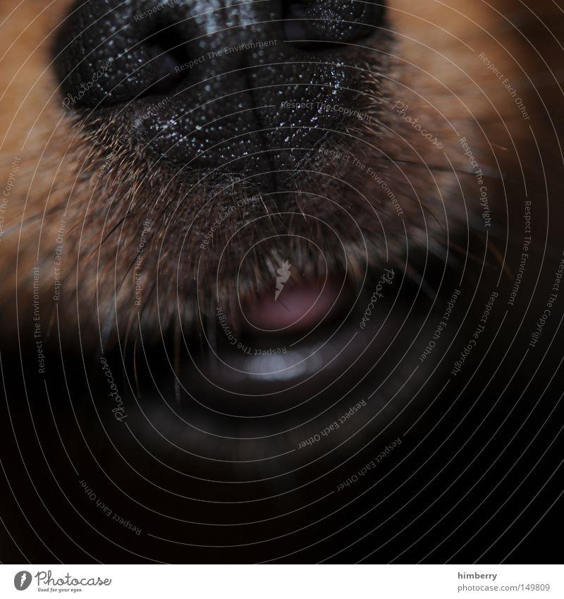 kalte schnauze Tier Hund Mund Nase Lippen Bart Makroaufnahme Geruch Haustier Säugetier Zunge Schnauze Barthaare
