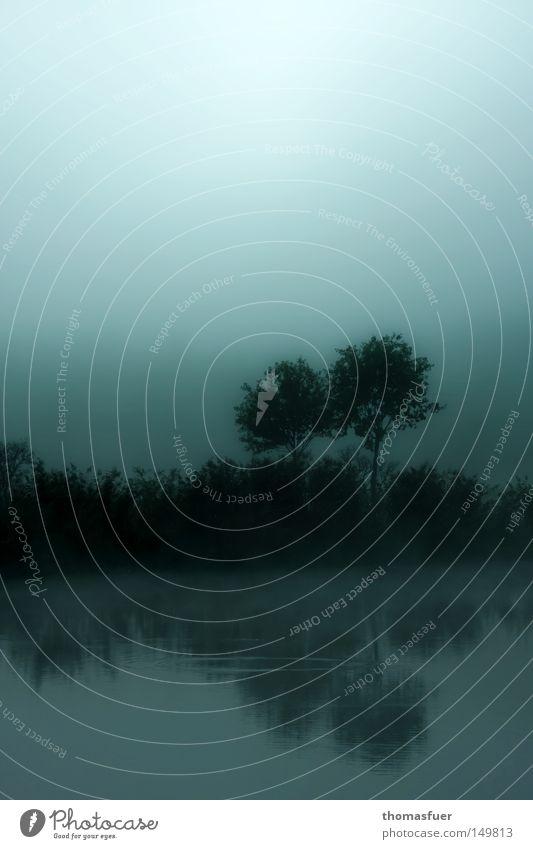 Jules Walz Baum Pflanze ruhig Wald Herbst Wiese träumen Traurigkeit Feld Nebel Hoffnung Trauer Fisch Vergänglichkeit Verzweiflung tief