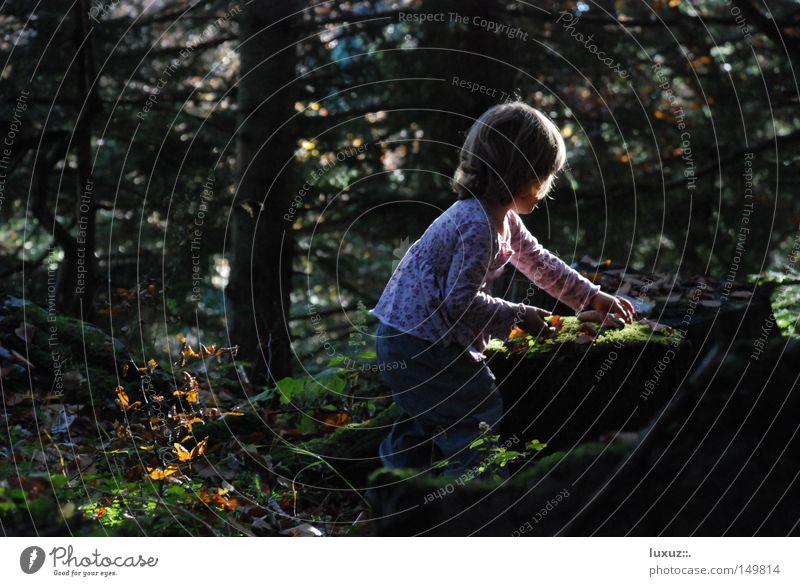 Hexle Kind Natur Mädchen Wald Spielen Kindergarten Bildung Neugier entdecken Pilz Diskjockey Sammlung Mischung Kindererziehung Entwicklung