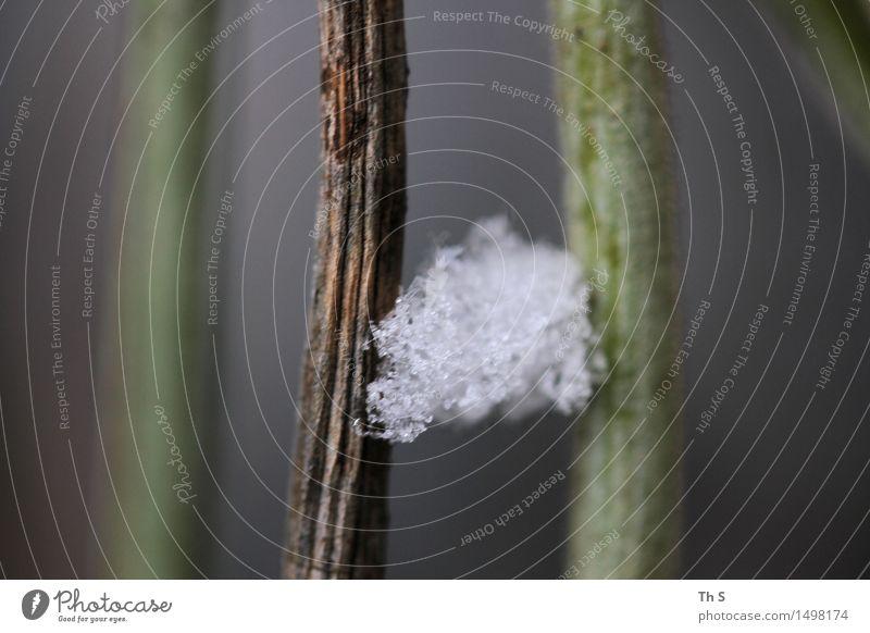 Winter Natur Pflanze Schnee ästhetisch authentisch elegant frisch natürlich braun grau grün weiß Gelassenheit geduldig ruhig einzigartig harmonisch schön