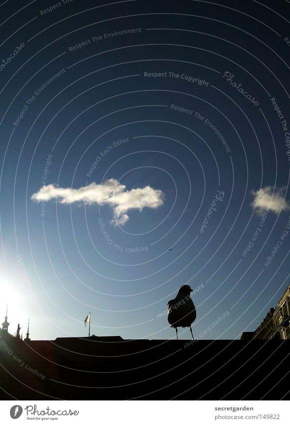 auf der mauer, auf der lauer... Möwe Binnenalster Alster Himmel Mauer Schatten Silhouette Sonne Wolken Haus Turmspitze Vogel Tier beobachten Schönes Wetter