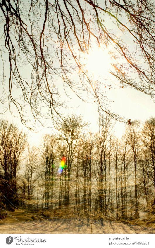 spieltrieb| spielen macht spaß Umwelt Natur Pflanze Luft Himmel Sonne Winter Schönes Wetter Eis Frost Baum Sträucher Wald Doppelbelichtung Holz authentisch hell