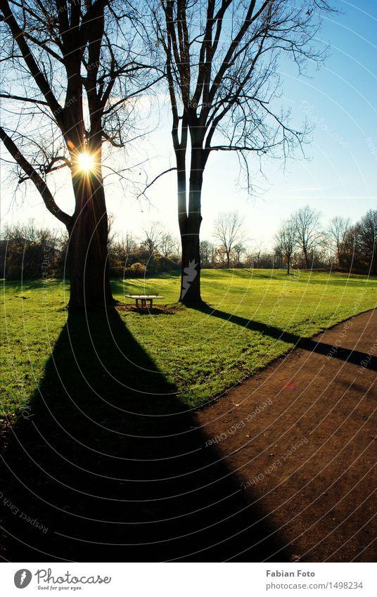 Licht & Schatten Natur Sonne Herbst Baum Park Wiese Feld Holz Überraschung träumen Schattenspiel Lichtspiel Lichtpunkt Lichtblick Farbfoto Tag