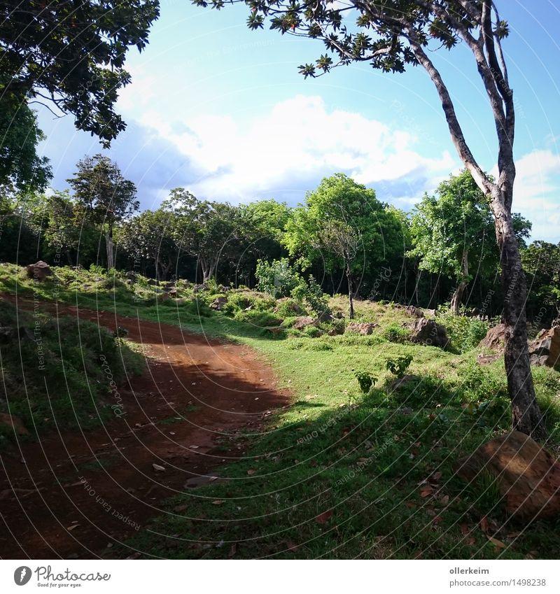 in den Bergen von Mauritius Himmel Natur Ferien & Urlaub & Reisen Pflanze Sommer Baum Landschaft Wolken Tier Ferne Berge u. Gebirge Wärme Gras Tourismus Wetter