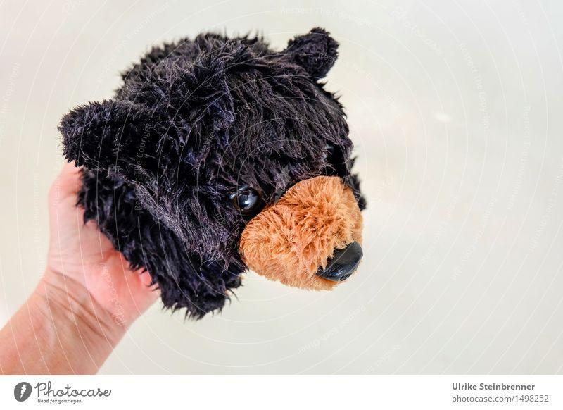 Waschbär Haustier Bär Grizzly 1 Tier Schwimmen & Baden hängen Blick kuschlig nass weich Reinlichkeit Sauberkeit Stofftiere Spielzeug Schwarzbär Plüsch Schnauze