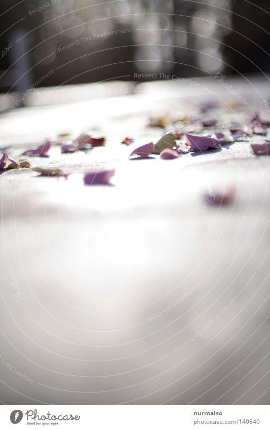 Ausgestreut Blume Blatt Boden Blütenblatt verteilen