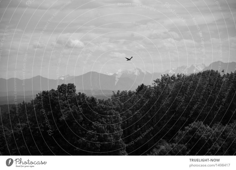 Heimatlandblick mit Greifvogel - - - Himmel Natur Ferien & Urlaub & Reisen Pflanze Sommer Landschaft Wolken ruhig Ferne Wald Berge u. Gebirge Freiheit Horizont
