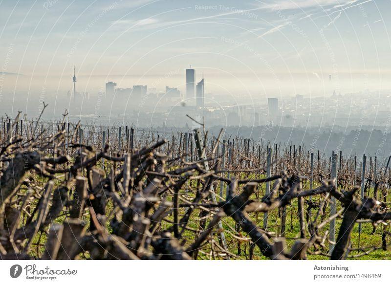 die Stadt im Hintergrund Himmel Natur Pflanze blau grün Landschaft Wolken Ferne dunkel schwarz Umwelt Gras Gebäude hell Horizont