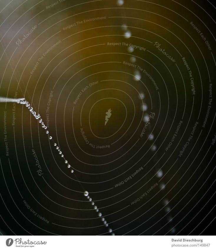 Tropfenkette quer Spinnennetz Schnur gefangen Regen Nebel Wetter Meteorologie Wassertropfen Morgen Tau Hinterhalt Falle kleben Klebstoff Insekt Wiese hängen