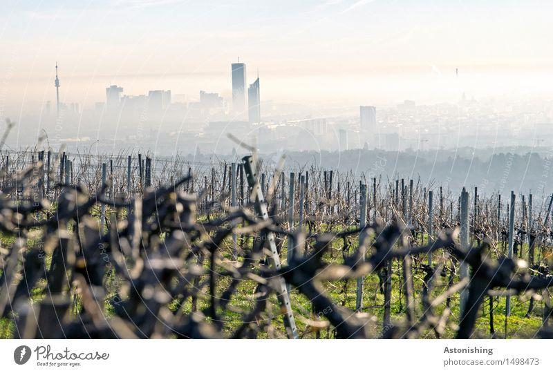 die Stadt im Hintergrund II Himmel Natur Pflanze blau grün Landschaft Wolken Ferne schwarz Umwelt Gras hell Horizont Wetter Nebel