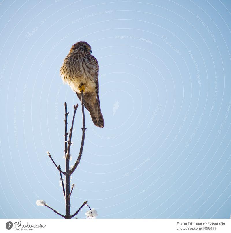 Aussicht Greifvogel Himmel Natur blau Tier Umwelt gelb Schnee natürlich braun Vogel orange glänzend elegant Wildtier ästhetisch sitzen