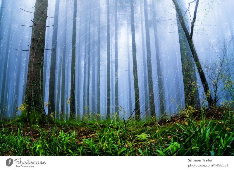 Zum Licht Tourismus Ausflug Expedition Tier Luft Himmel Herbst Klima Wetter Nebel Regen Moos Farn Wald Wachstum bedrohlich gruselig kalt nass demütig