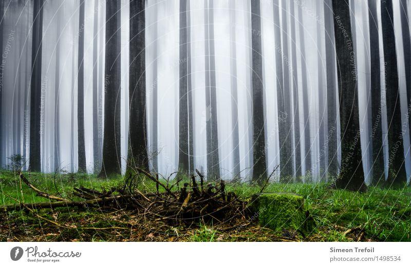 Schwarzwald Ferien & Urlaub & Reisen Ausflug Abenteuer wandern Landschaft Pflanze Frühling Herbst schlechtes Wetter Nebel Baum Moos Wald Berge u. Gebirge