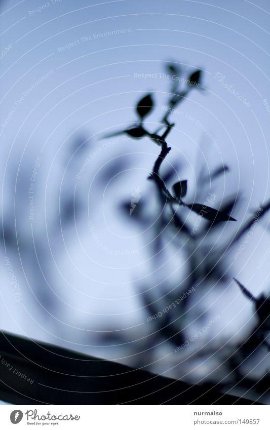 Zartlich Himmel blau Blatt Farbe Fenster Gefühle Metall Park Kunst trist Dekoration & Verzierung Ast Dinge zart Burg oder Schloss China