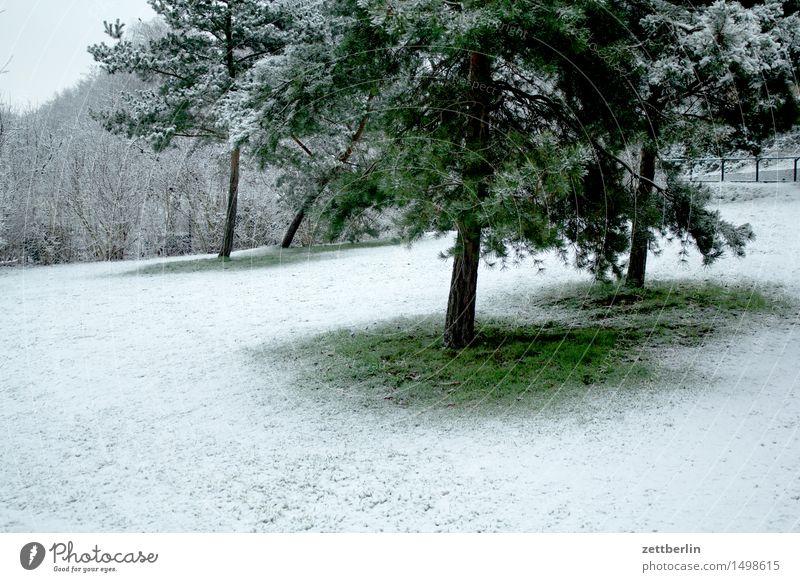 Neuschnee Berlin kalt Landschaft Menschenleer Schnee Schneefall Schneedecke Tauwetter Winter Park Wiese Rasen Baum Nadelbaum Weihnachtsbaum Textfreiraum weiß