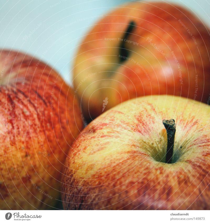 veräppelt rot Ernährung Gesundheit Lebensmittel Frucht frisch Apfel Stengel lecker reif Ernte ökologisch Vitamin Bioprodukte Biologische Landwirtschaft biologisch