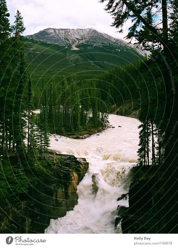 Sunwapta Falls Wasser Baum Ferien & Urlaub & Reisen Wald Berge u. Gebirge Felsen Insel Fluss Reisefotografie Kanada eng Bach Wasserfall Schlucht schmal