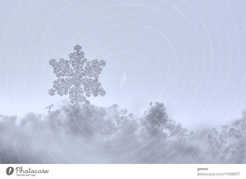Die letzte Flocke Umwelt Natur Winter Klima Wetter Eis Frost Schnee Schneefall kalt blau grau Schneeflocke Schneekristall Farbfoto Außenaufnahme Nahaufnahme