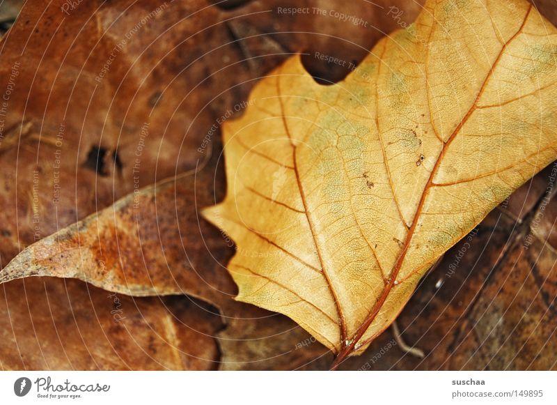 urlaub .. (ach nee restlaub) Winter Blatt gelb dunkel kalt Herbst braun schlafen Vergänglichkeit Müdigkeit Jahreszeiten frieren Gefäße vertrocknet welk