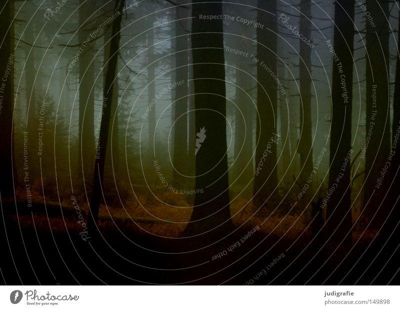 Dämmerung senkte sich von oben Natur Baum Winter Farbe Wald kalt Herbst Berge u. Gebirge wandern Nebel Umwelt mystisch Dunst November Harz