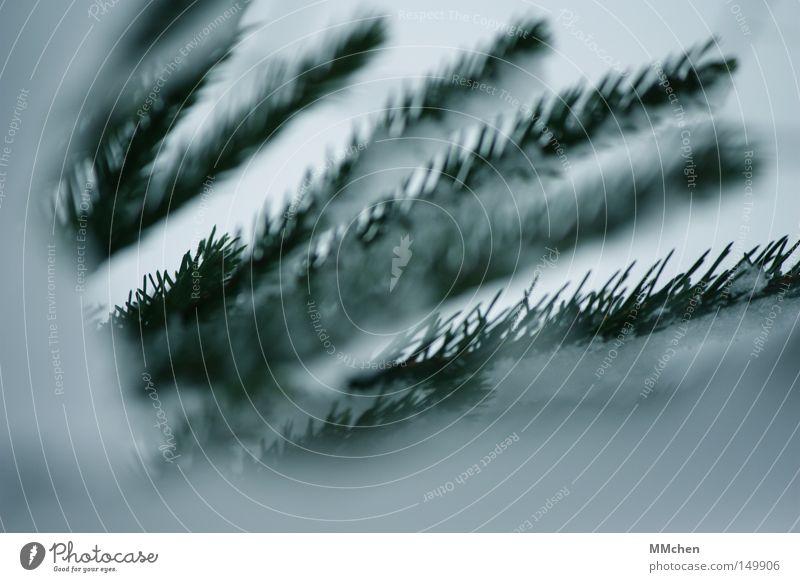 Von drauß' vom Walde komm ich her grün weiß Winter kalt Schnee Frost Zweig Tanne