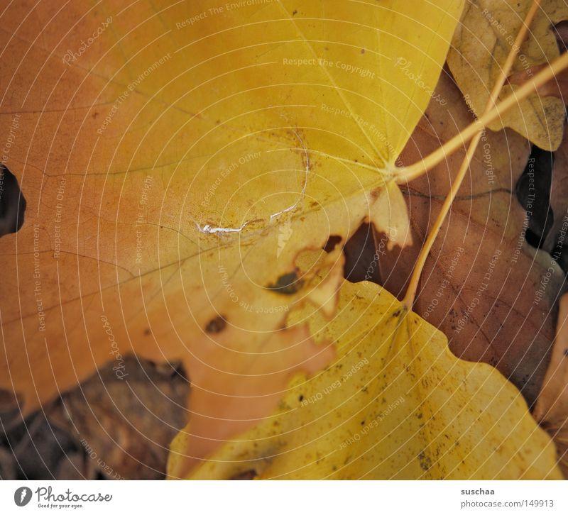 resturlaub is alle .. Blatt Winter gelb Wiese kalt Herbst braun Bodenbelag Frost Vergänglichkeit Jahreszeiten Müdigkeit frieren