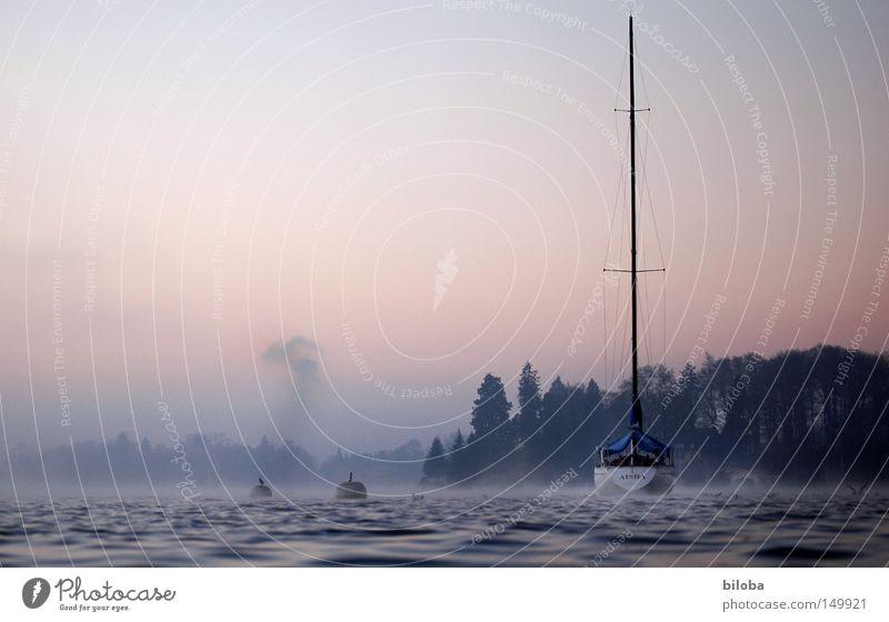 Schiffe versenken! Wasserfahrzeug Segelboot liquide Rauch kalt tief ruhig See Schweiz Wellen Wald Nebel Himmel Stimmung unberührt frei Freiheit harmonisch