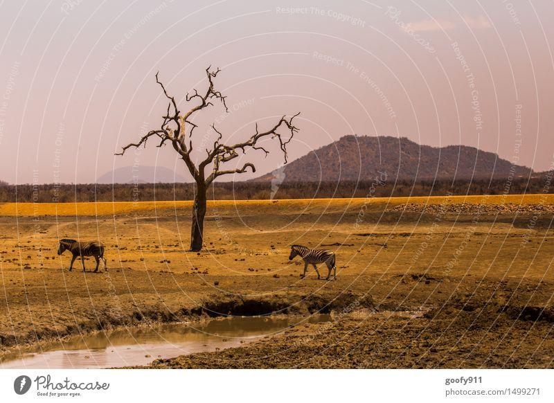 AFRIKA Umwelt Natur Landschaft Erde Sand Wasser Sonnenlicht Frühling Sommer Schönes Wetter Wärme Dürre Baum Hügel Wüste Steppe Steppenzebra Tier Wildtier Fährte