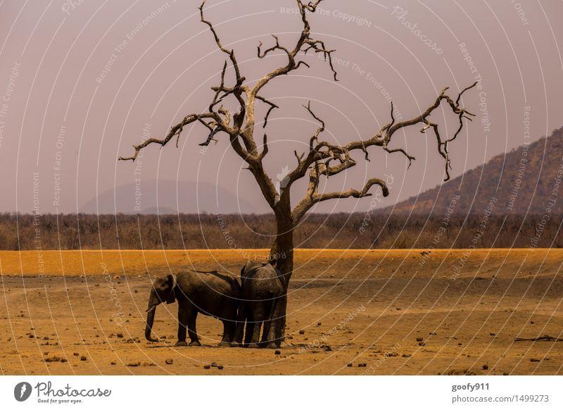 SCHATTENPLATZ :-)))) Himmel Natur Ferien & Urlaub & Reisen Sommer Baum Landschaft Tier Umwelt Frühling Holz Sand Erde Wildtier Tierpaar stehen genießen