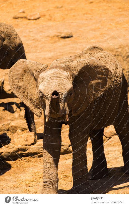 Kleiner frecher Elefant Natur Ferien & Urlaub & Reisen Sommer Landschaft Tier Tierjunges Umwelt gelb Frühling Stein braun Sand orange Erde Wildtier stehen