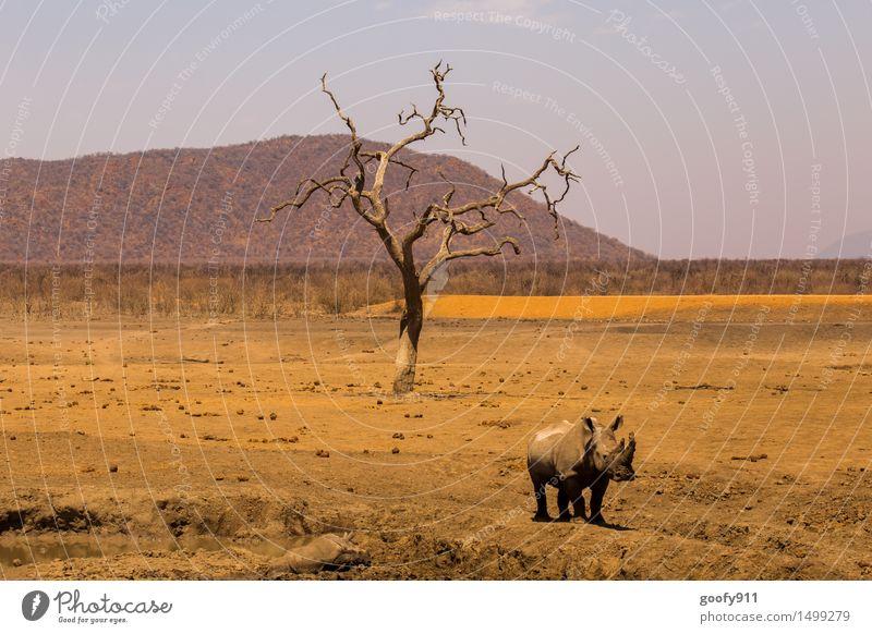 AFRIKA Natur Ferien & Urlaub & Reisen Sommer Baum Sonne Landschaft Tier Tierjunges Umwelt gelb Frühling Stein braun Sand orange wild