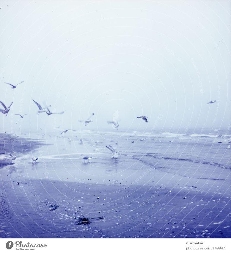 Sea gull's sky schön Himmel Meer Winter Strand Ferien & Urlaub & Reisen Einsamkeit Tier Gefühle Sand Vogel Küste Fliege Nebel fliegen leer