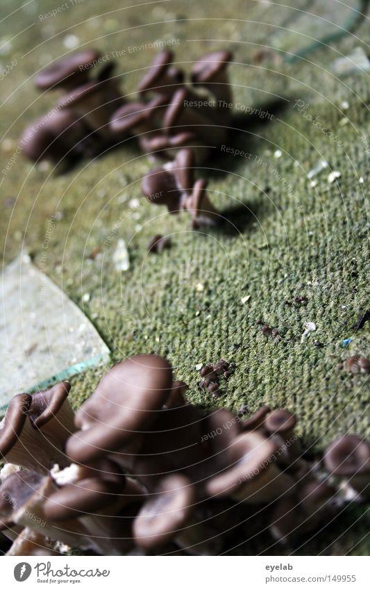 Lecker Teppichpilz Belag Pilz Scherbe dreckig alt verfallen feucht schäbig Bodenbelag Nahaufnahme Wachstum anpassungsfähig Verfall Durchsetzungsvermögen