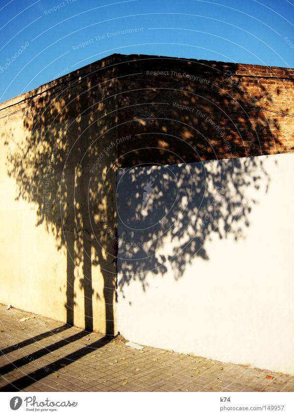 o.T. Baum Baumkrone Schatten Licht hell Himmel blau Wand Mauer Baumstamm Ecke Stadt Straße Bürgersteig Blatt scheckig geschnitten Anschnitt Verkehrswege
