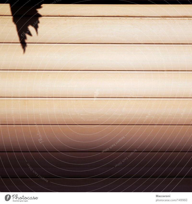 Mmlsm Umwelt Pflanze Horizont Herbst Blatt Grünpflanze Garten Wald Mauer Wand Fassade Terrasse Fenster dunkel Stadt rot schwarz ruhig Bildung Design elegant