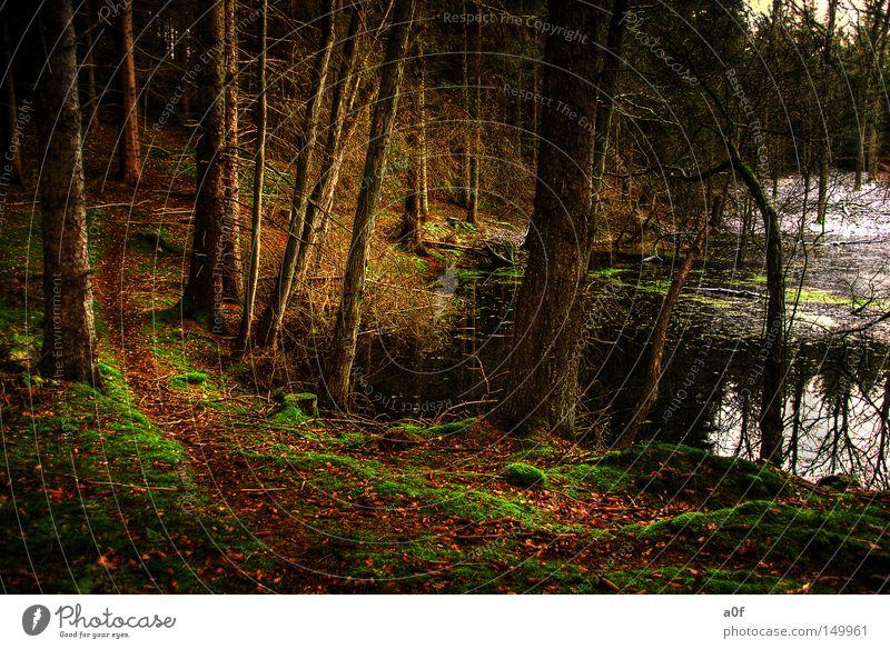 alone Baum Winter ruhig Einsamkeit Wald dunkel Schnee Wege & Pfade Vergangenheit Teich unheilbringend