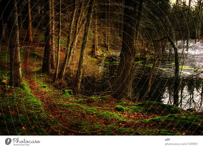 alone Teich ruhig Wald Wege & Pfade Baum dunkel Winter Schnee Vergangenheit unheilbringend Einsamkeit