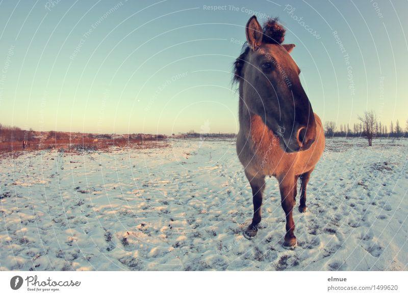 sundownblues Himmel blau Erholung Einsamkeit ruhig Tier Winter Schnee Glück braun träumen Zufriedenheit wild stehen genießen beobachten
