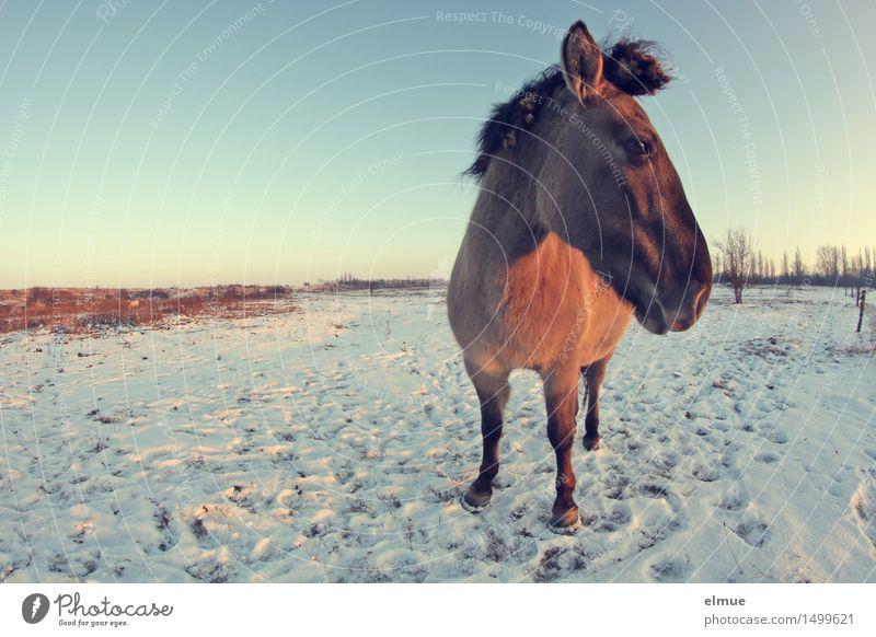 Sonnenuntergang blau schön ruhig Winter kalt Schnee außergewöhnlich Freiheit braun Horizont träumen gold stehen Kommunizieren beobachten