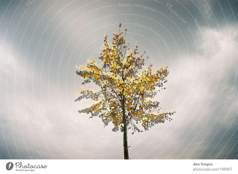 doppeltes Baum Blatt gelb grau Schatten Mitte Natur Wolken Himmel Herbst Ast Doppelbelichtung analog flash