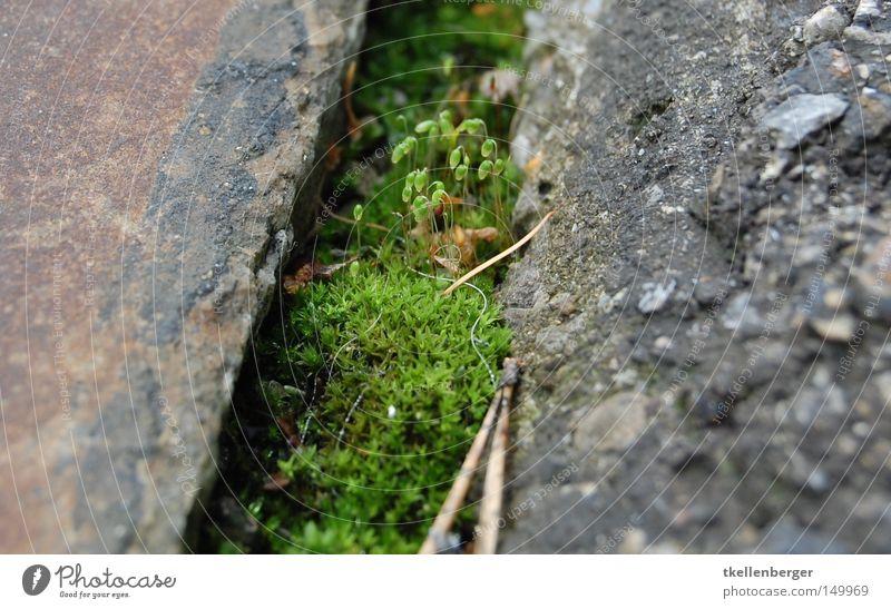 Mit dem Kopf durch den Boden Natur grün Pflanze rot Blatt schwarz Straße Berge u. Gebirge grau Blüte Kopf Stein klein Erde gehen Beton