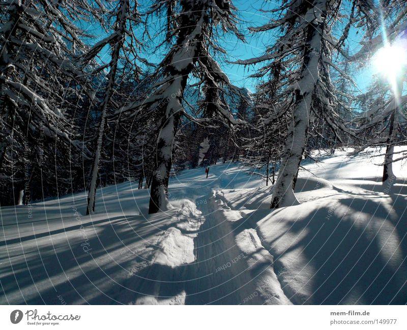 durch den wald Spuren Skispur Wald Tanne Gelände Skitour Gegenlicht Neuschnee Wege & Pfade unberührt Schnee träumen Schneelandschaft Dezember Januar Februar