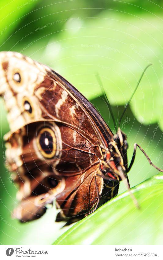 struktur Natur Pflanze Tier Baum Blatt Garten Park Wiese Wildtier Schmetterling Tiergesicht Flügel 1 beobachten Erholung fliegen außergewöhnlich exotisch schön
