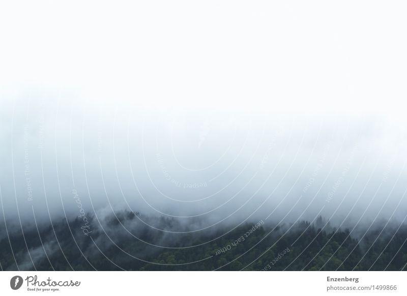 Nebelwand Umwelt Natur Landschaft Urelemente Luft Wasser Wolken Wetter Wald Berge u. Gebirge Hoffnung Glaube demütig träumen Traurigkeit Sorge Trauer Tod