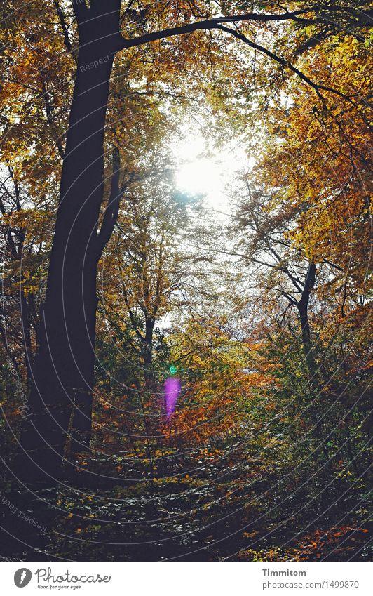 Auf die Plätze... Umwelt Natur Pflanze Herbst Wetter Schönes Wetter Baum Wald Gefühle Blatt Färbung Blendenfleck Sonnenlicht Baumstamm Farbfoto Außenaufnahme
