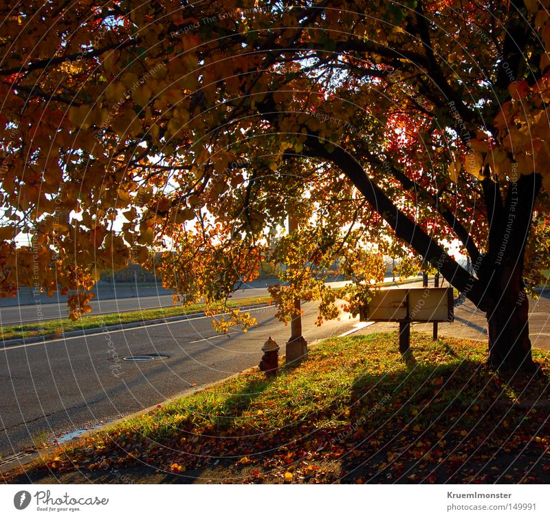It's A Beautiful Day Baum Blatt Herbst Sonne Wärme Morgen Sonnenuntergang Schatten rot Indian Summer tree fallen autumn leaves morning